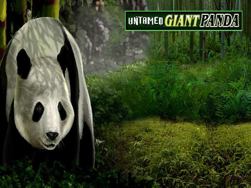 Untamed Giant Panda Slot - Read the Review and Play for Free