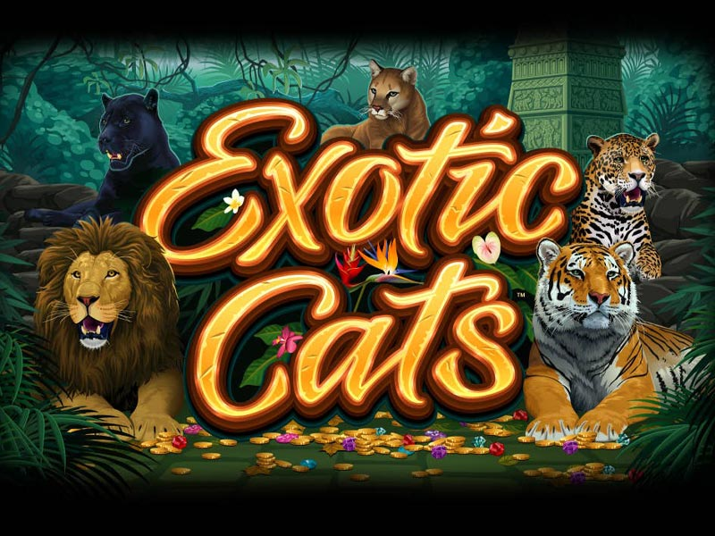 Exotic Cats Slot Featured Image