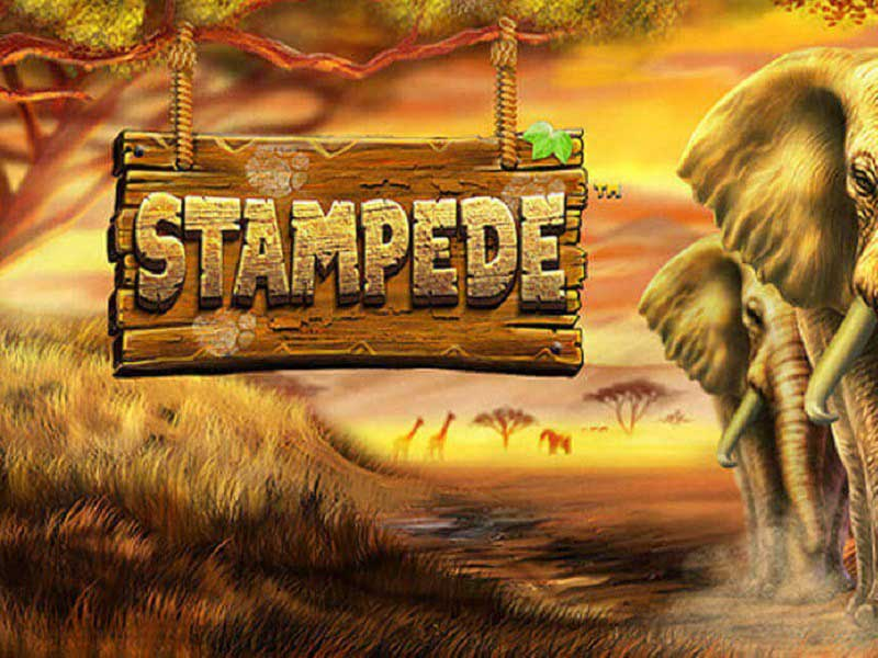 Stampede Slot Featured Image